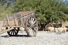 Gammal tappninghästvagn med getter, jordbruk i Argentina royaltyfri fotografi