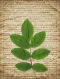 Gammal tappningtidningsbakgrund med den torra växten Arkivfoto