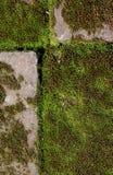 Gammal tegelsten med grön mossa Arkivbilder