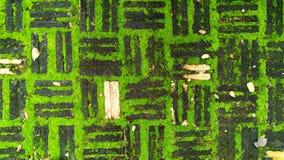 gammal tegelsten med grön mossa Fotografering för Bildbyråer