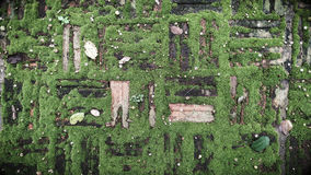 gammal tegelsten med grön mossa Royaltyfri Foto