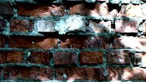 Gammal tegelstenvägg i en bakgrundsbild arkivfilmer