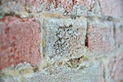 Gammal tegelstenvägg i frost Pushkin, Tsarskoe Selo Arkivfoto