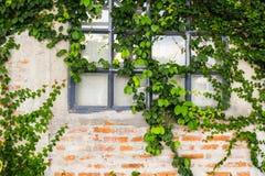 Gammal tegelstenvägg med det glass fönstret royaltyfri bild