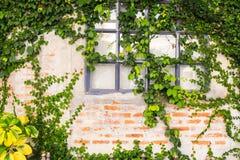 Gammal tegelstenvägg med det glass fönstret fotografering för bildbyråer