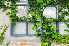 Gammal tegelstenvägg med det glass fönstret royaltyfri foto