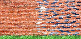 gammal tegelstenvägg med grönskande gräs & ljus himmel Fotografering för Bildbyråer