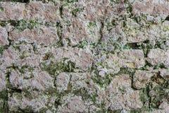 Gammal tegelstenvägg och konkret spricka för lav royaltyfria bilder