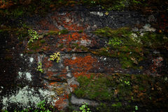 Gammal tegelstenvägg som täckas med mossa och växter Arkivfoto
