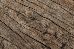 Gammal textur för bakgrund för trädhudskrynkla Fotografering för Bildbyråer