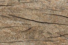 Gammal textur för bakgrund för trädhudskrynkla Royaltyfria Foton