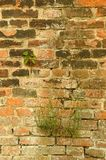 Gammal textur för tegelstenvägg med blommor Fotografering för Bildbyråer