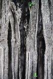 Gammal textur för trädskäll Arkivbilder