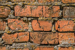 Gammal textur för vägg för röd tegelsten med sprickor och mossa Arkivbild