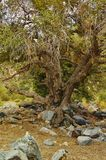 gammal texturerad tree för liggandeoak royaltyfri fotografi