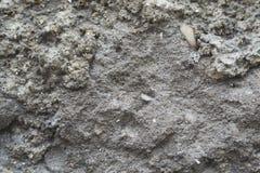gammal texturvägg för cement Royaltyfri Bild