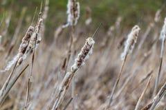 Gammal torr vass, naturfält Arkivfoto