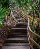 Gammal trä och stentrappuppgång som leder upp en kulle i djungeln arkivfoton