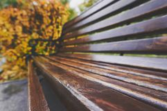 Gammal träbänk i parkera i höst naturlig tappninghöstbakgrund Royaltyfri Foto