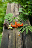 Gammal träbakgrund för höst med naturliga beståndsdelar Arkivfoton