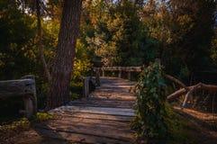 Gammal träbro i den djupa skogen, naturlig bakgrund royaltyfri fotografi