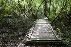 Gammal träbro i mitt av en skog Arkivfoto