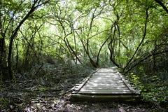 Gammal träbro i mitt av en skog Fotografering för Bildbyråer