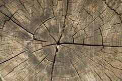 Gammal trädavsnitttextur Arkivbild
