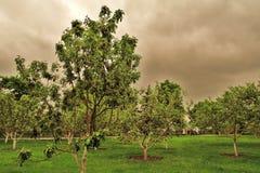 Gammal trädgård i MoskvaKreml gröna trees Grönt gräs Arkivfoto