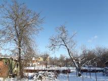 Gammal trädgård i vinteraftonen Arkivbild