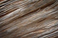 Gammal trädstam för Wood textur Arkivfoton