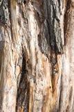 Gammal trädstam som bakgrund Royaltyfria Bilder