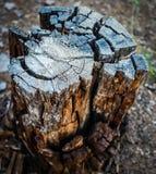 Gammal trädstam som visar trevliga brytande modeller Fotografering för Bildbyråer