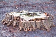 Gammal trädstubbe på en jordning royaltyfria foton