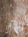Gammal trädvisningbuse och befläckt textur fotografering för bildbyråer