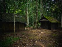 Gammal träkoja i regnskog i dramatisk stil Royaltyfri Foto