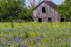Gammal träladugård i en Texas Field av vildblommor Arkivbild