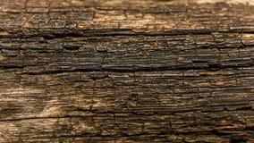 Gammal träsol som skiner för att stiga ombord på träbänkstrukturen naturlig abstrakt bakgrund royaltyfri bild