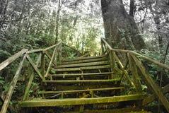Gammal trästege som leder till djupare skog Arkivbild