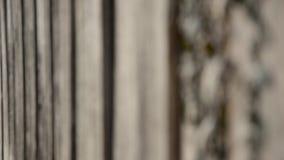 Gammal trästugavägg med den ruttna murgrönan stock video
