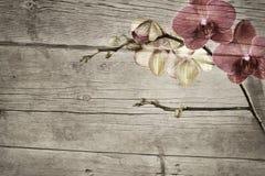 Gammal trätappningbakgrund med den rosa och magentafärgade phalaenopsisorkidén Royaltyfria Bilder