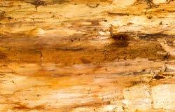 Gammal trätextur, bruntfärger Arkivbilder