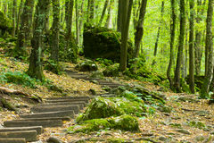 Gammal trätrappuppgång i skogen som leder till grottan Royaltyfri Bild