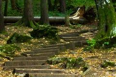 Gammal trätrappuppgång i skogen som leder till grottan Fotografering för Bildbyråer