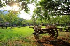 Gammal trävagn i trädgård Royaltyfri Foto
