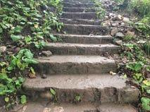 Gammal trappa med gröna växter arkivbild
