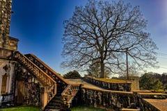Gammal trappa och gammalt träd Arkivfoto