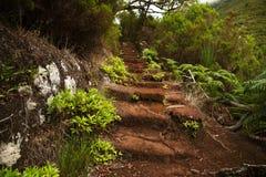 Gammal trappuppgång i den täta gröna skogen Arkivbild