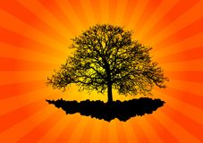 gammal tree Arkivfoton