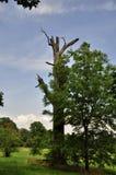 gammal tree Royaltyfria Bilder